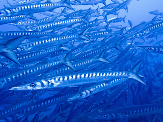 sizilien ferien guide sizilianische inseln unstica meer frischer fisch restaurant